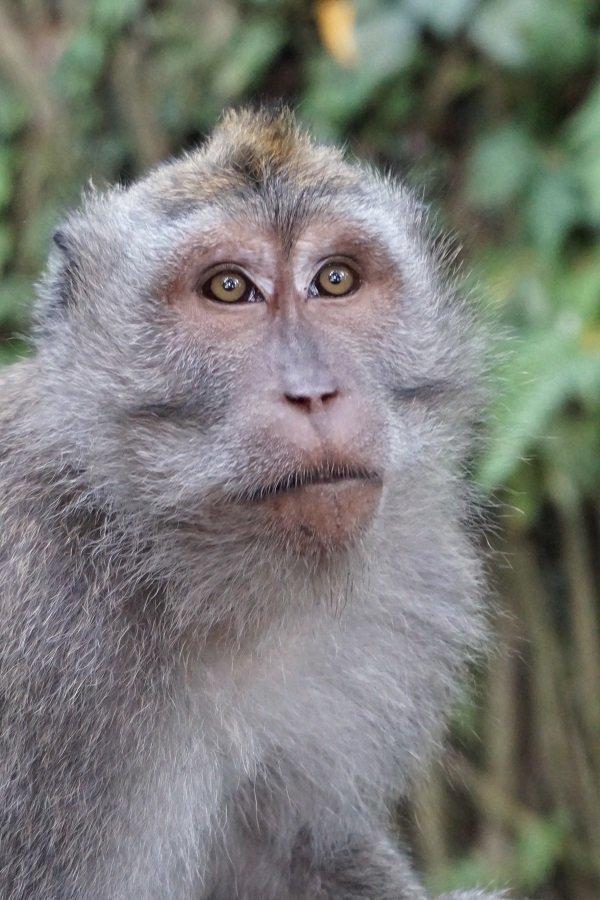 Sacred Monkey Forest Sanctuary Ubud, Bali – more than just monkeys -
