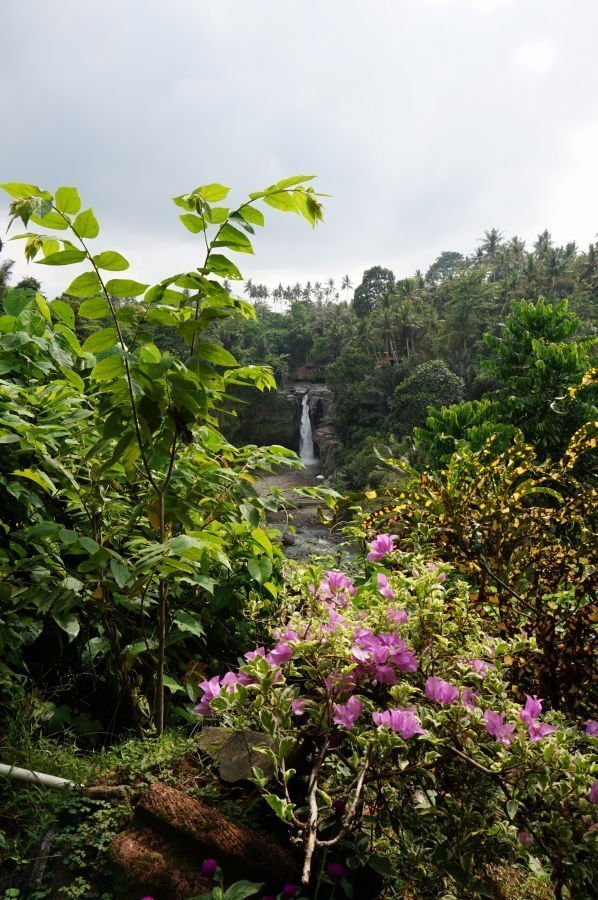 waterfall-background-flowers-foreground