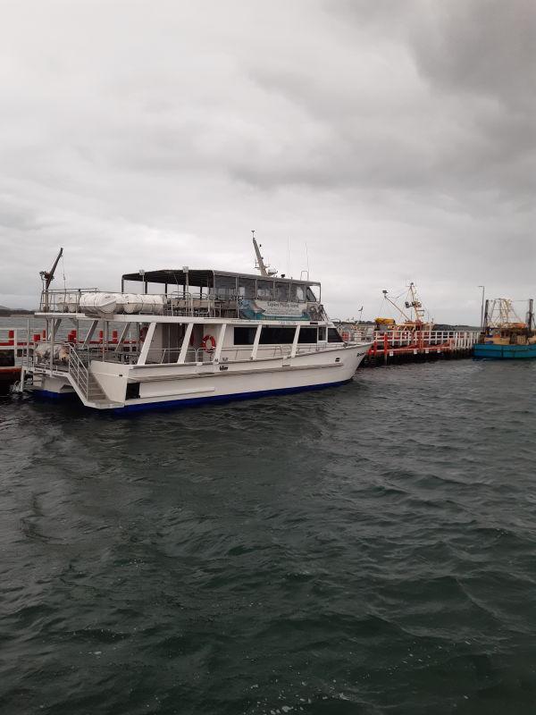 Wildlife-coast-cruises-boat