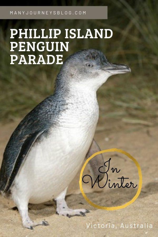 cute-little-penguin