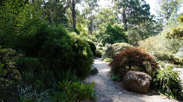 Dandenong Botanic Garden