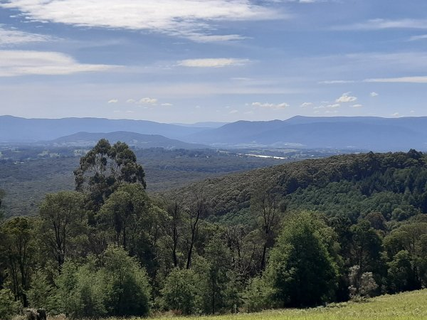 RJ Hamer Arboretum View