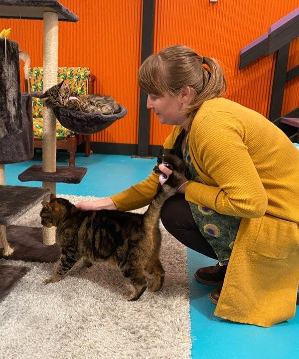 Grounded Paws Cat Cafe Traralgon