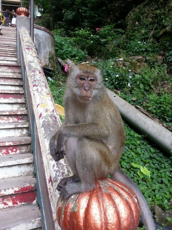 monkey-batu-caves