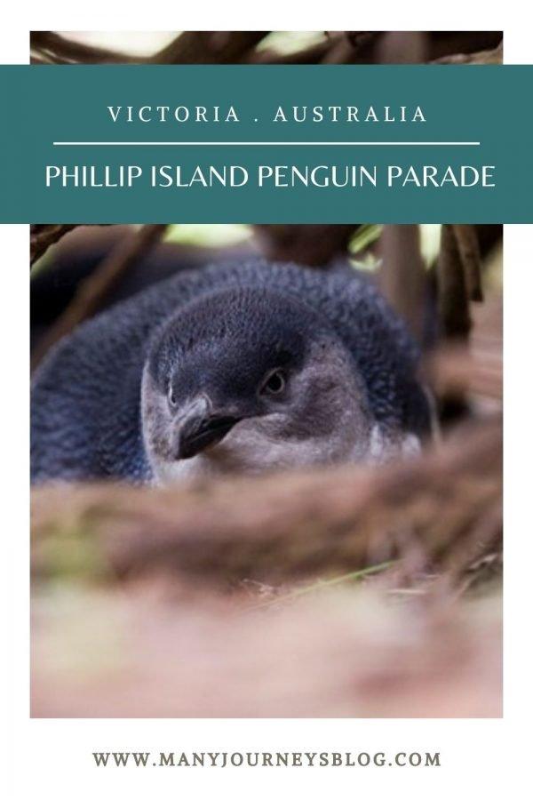 Phillip Island Penguin Parade Victoria Australia