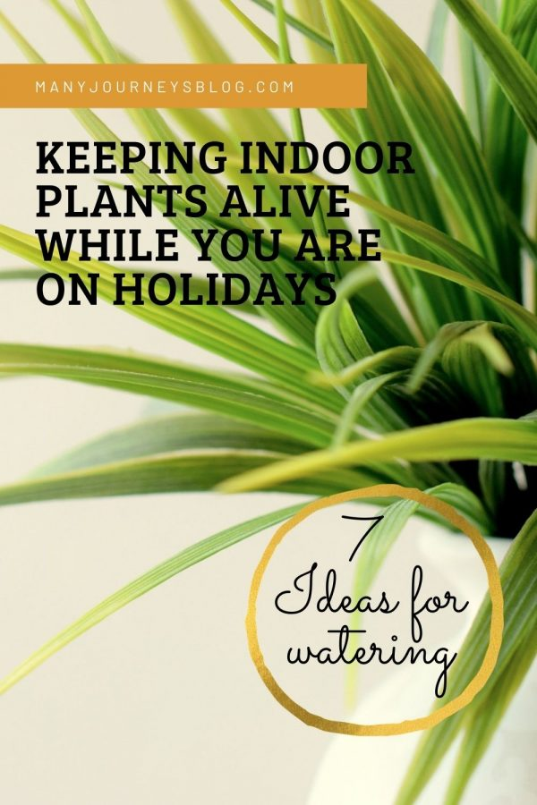 Indoor Plant Watering
