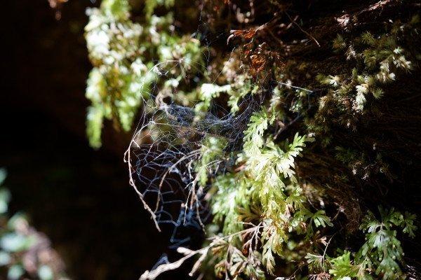 blue-cobwebs